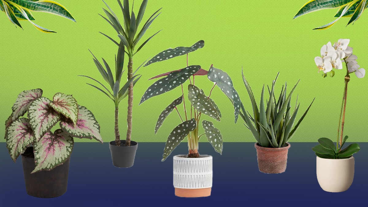 We Highly Recommend Switching to Fake Plants