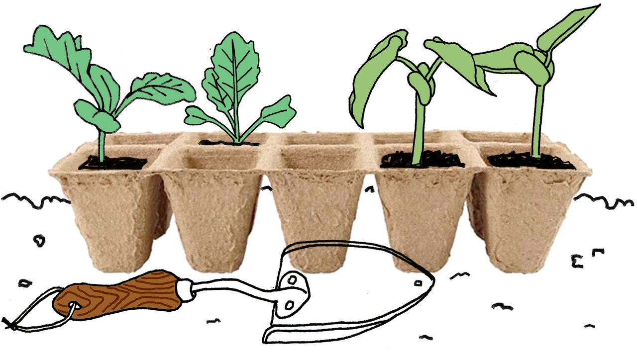 Everybody Can Grow Their Own Food: Here's How to Get Started
