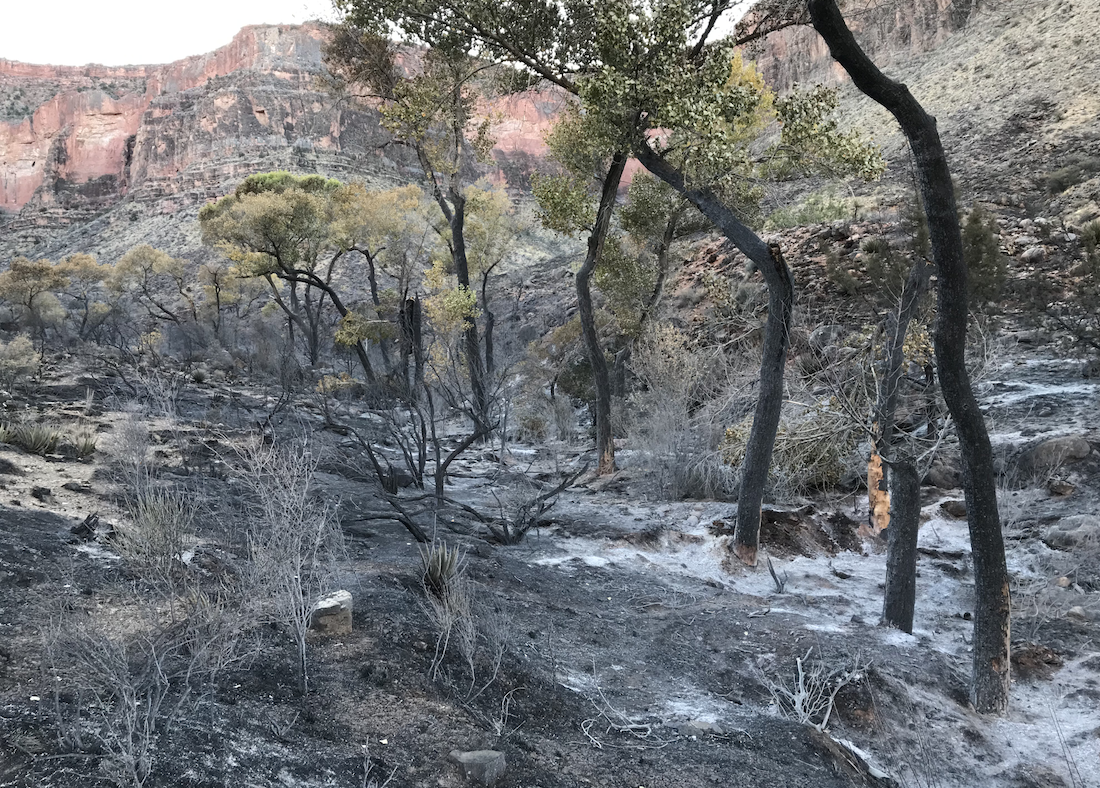 Camper Fined $53k For Starting Grand Canyon NP Fire With Burning Toilet Paper