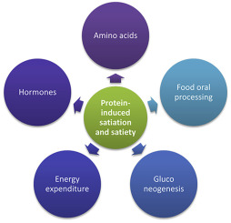 Revisiting the role of protein-induced satiation and satiety