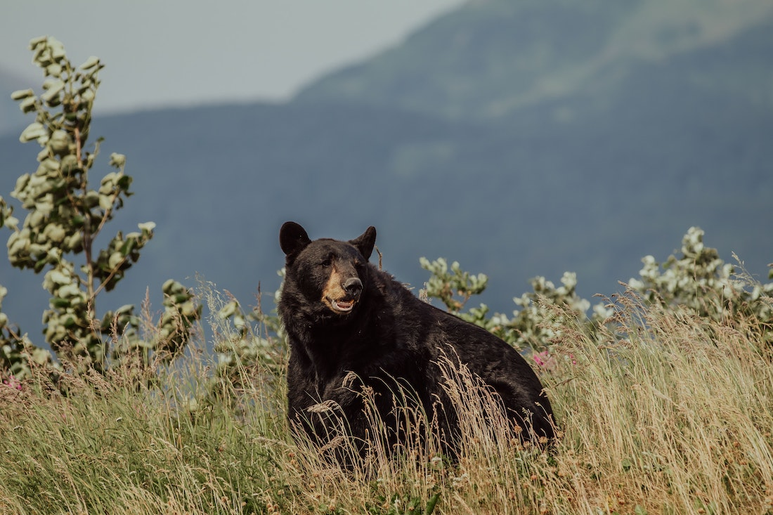 Why We Must Love the Bear's World
