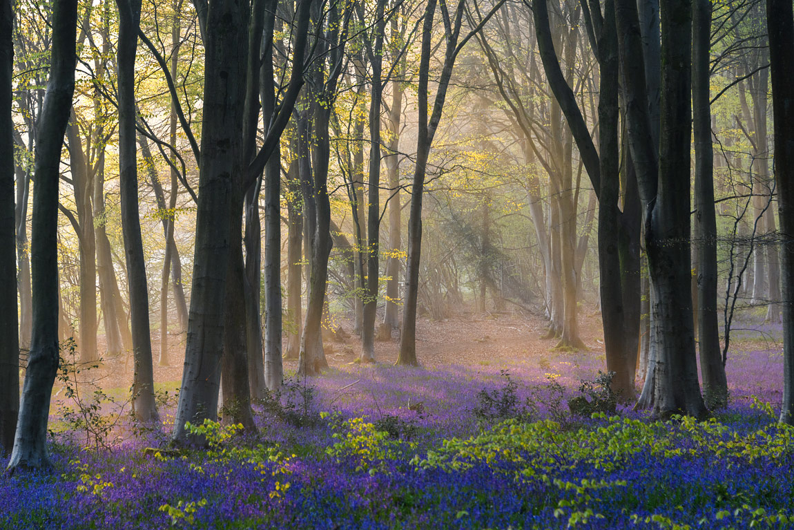 Micheldever Wood, Hampshire, England by Andy Dines