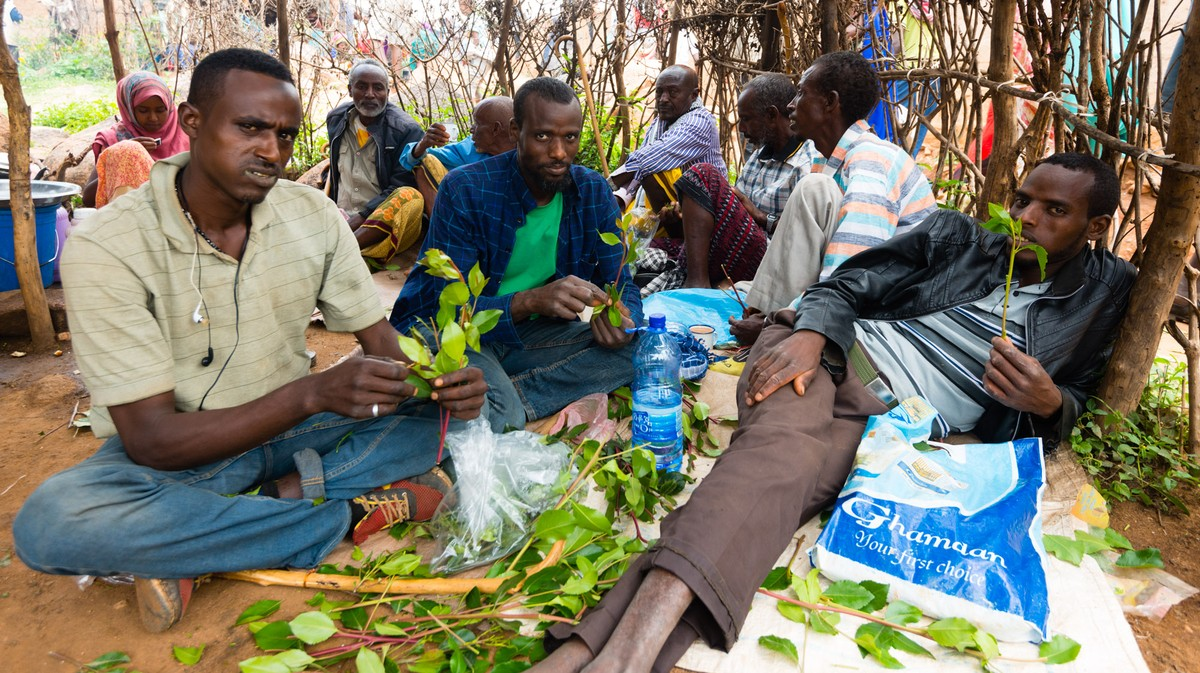 The Culture of Chewing Qat in Ethiopia