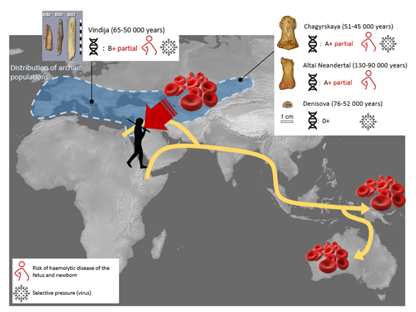 Neanderthal And Denisovan African Origin, Eurasian Dispersal, And Interbreeding With Early Homo Sapiens Confirmed