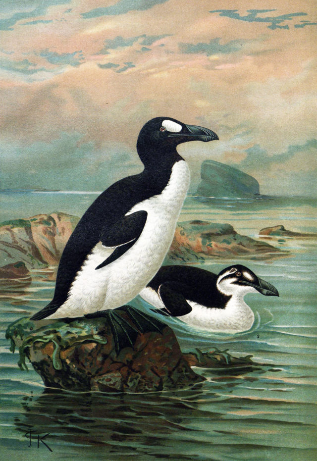 The Spiteful End of the Great Auk