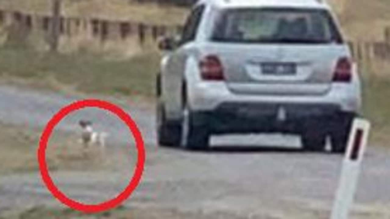 Witness claims dog dumped in 33C heat in Melbourne's north