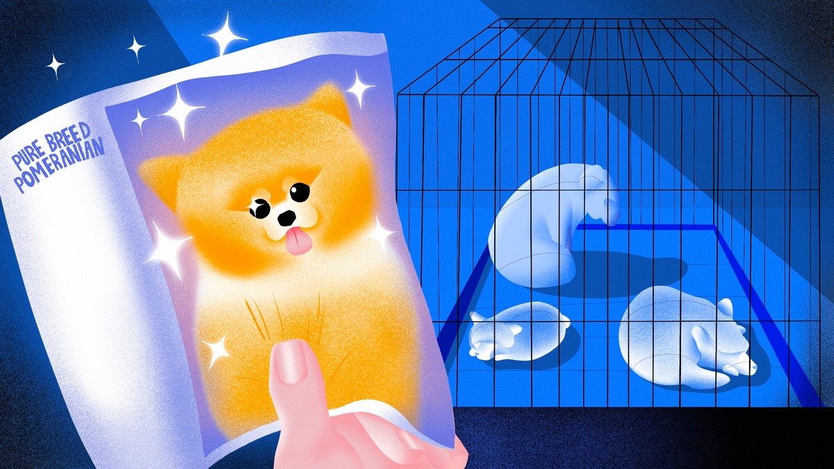 Pups 4 Sale: Inside the Biggest Scam of 2020