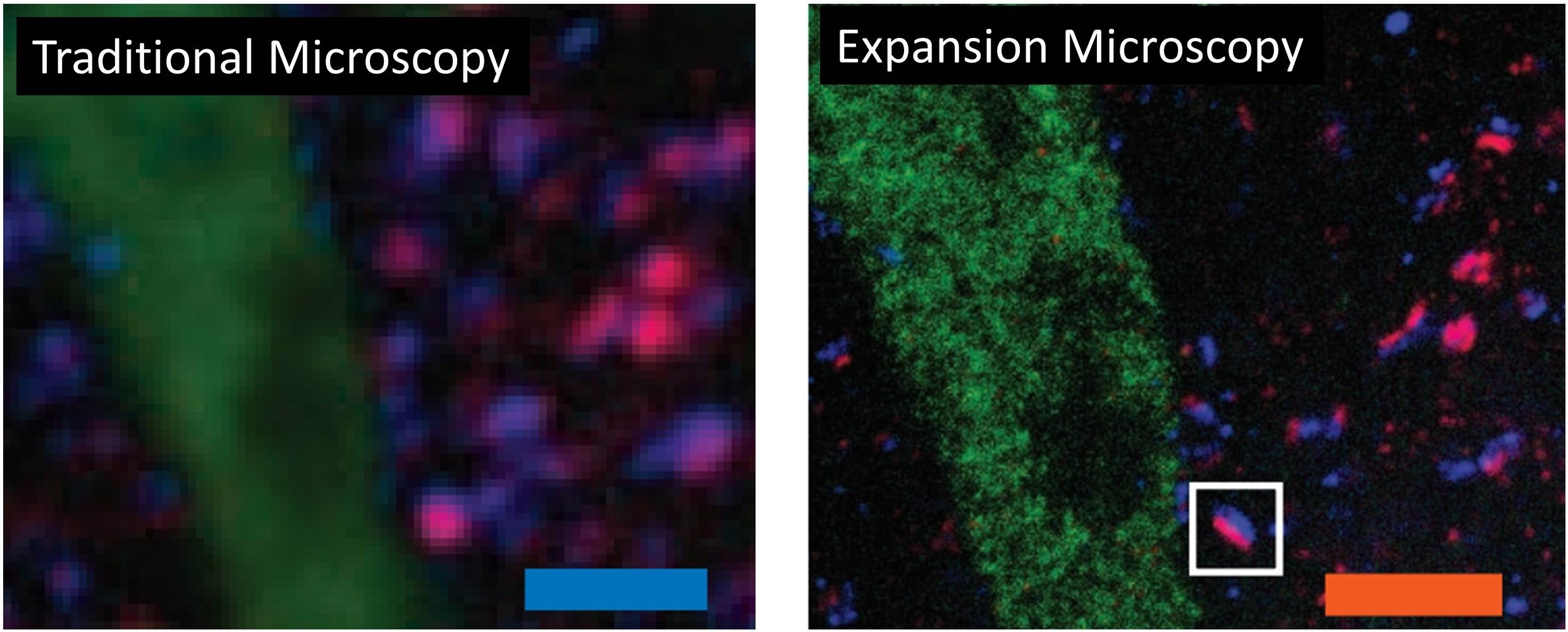 Diaper Compound Brings Change to Cell Microscopy