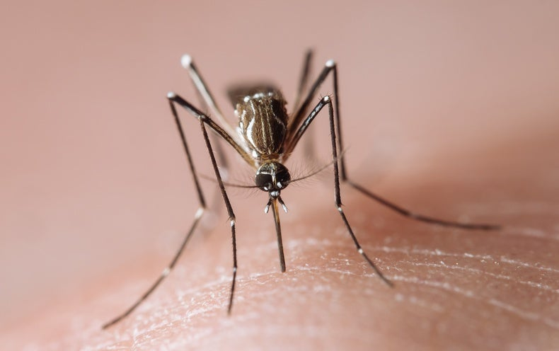 Artificial Light Keeps Mosquitoes Biting Late into the Night
