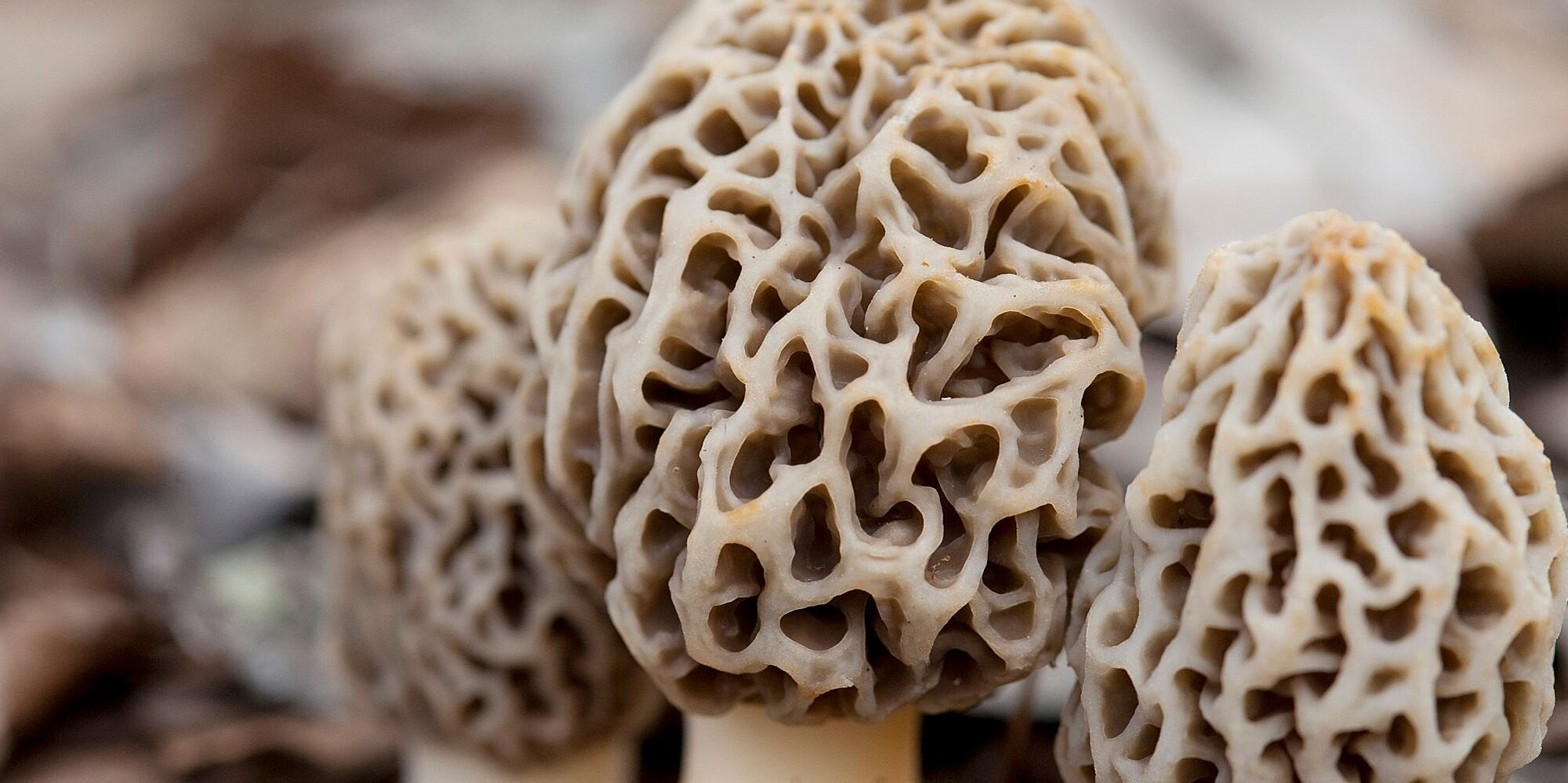 What Are Morel Mushrooms and How Do You Cook With Them?