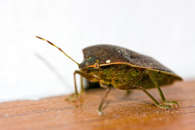 Stabbing Bed Bugs, Lloyd Christmas, Cliff from CliffsNotes and More in Yet Another 10 Quick Facts