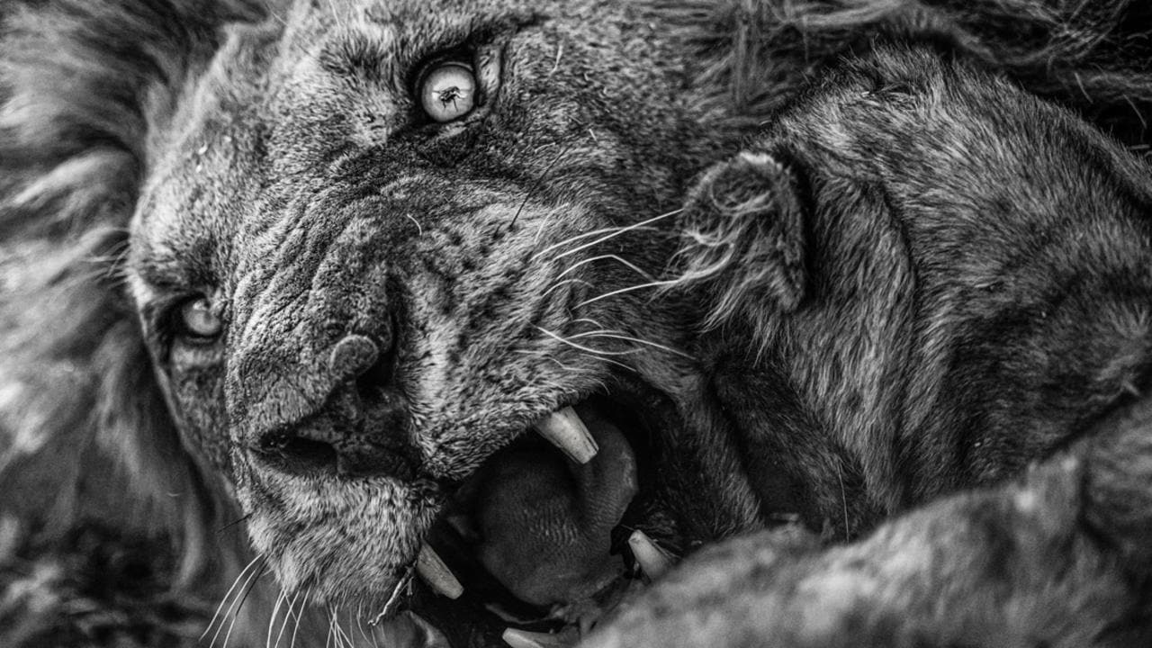 See winning image for Africa Geographic Photographer of the Year 2021