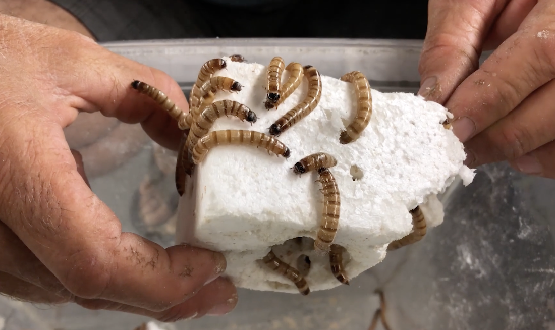 How Worms Can Turn Old Surfboards Into Soil