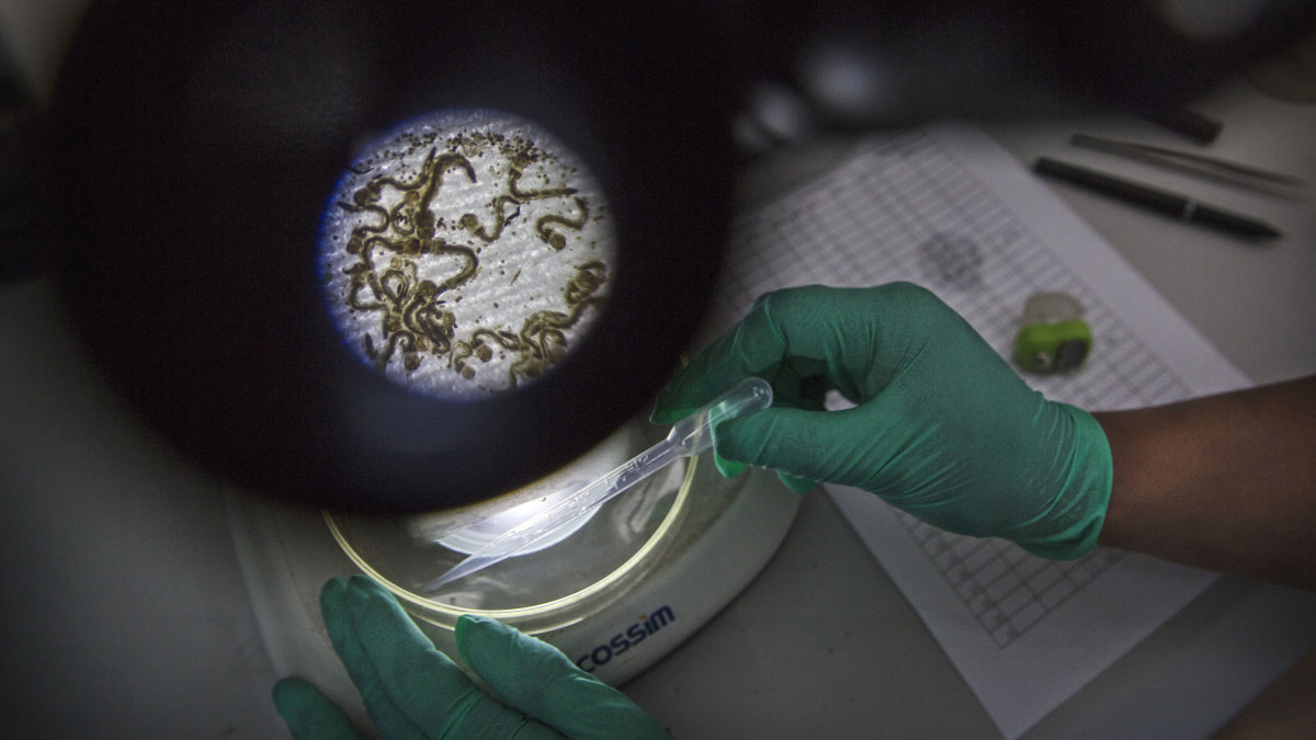 Scientists Call for a Global Germ Bank