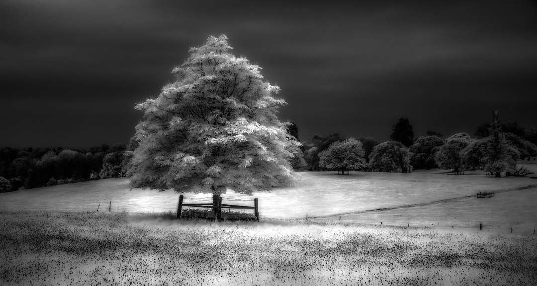 Free Feature • A Guide to Infrared Landscape Photography