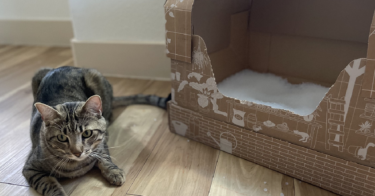 Cat Owners, Get a Disposable Litter Box Monthly