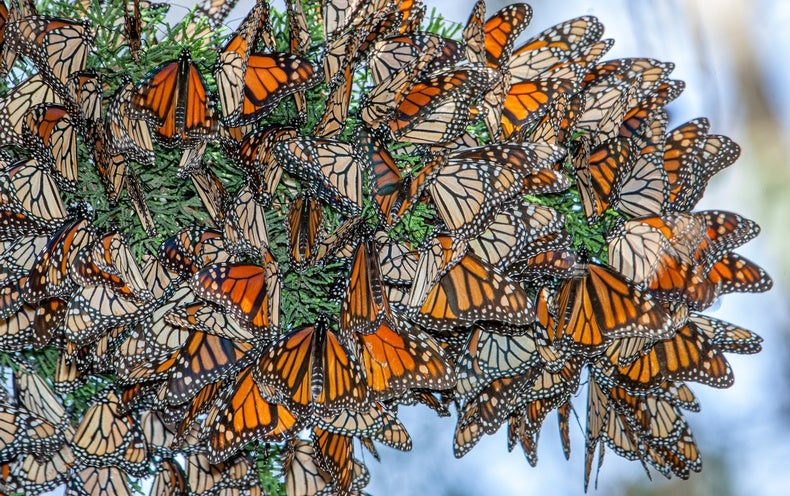 Save the Butterflies—but Not to Save Our Food Supply