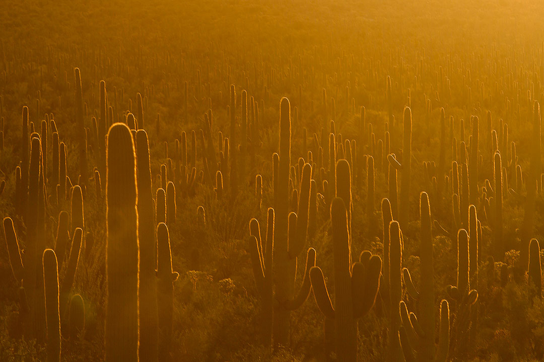 11 Beautiful Things to Do in Saguaro National Park