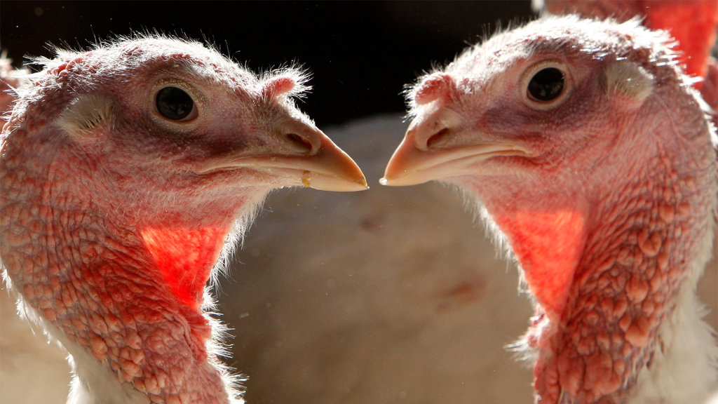 What's the Difference Between White and Dark Meat Turkey?