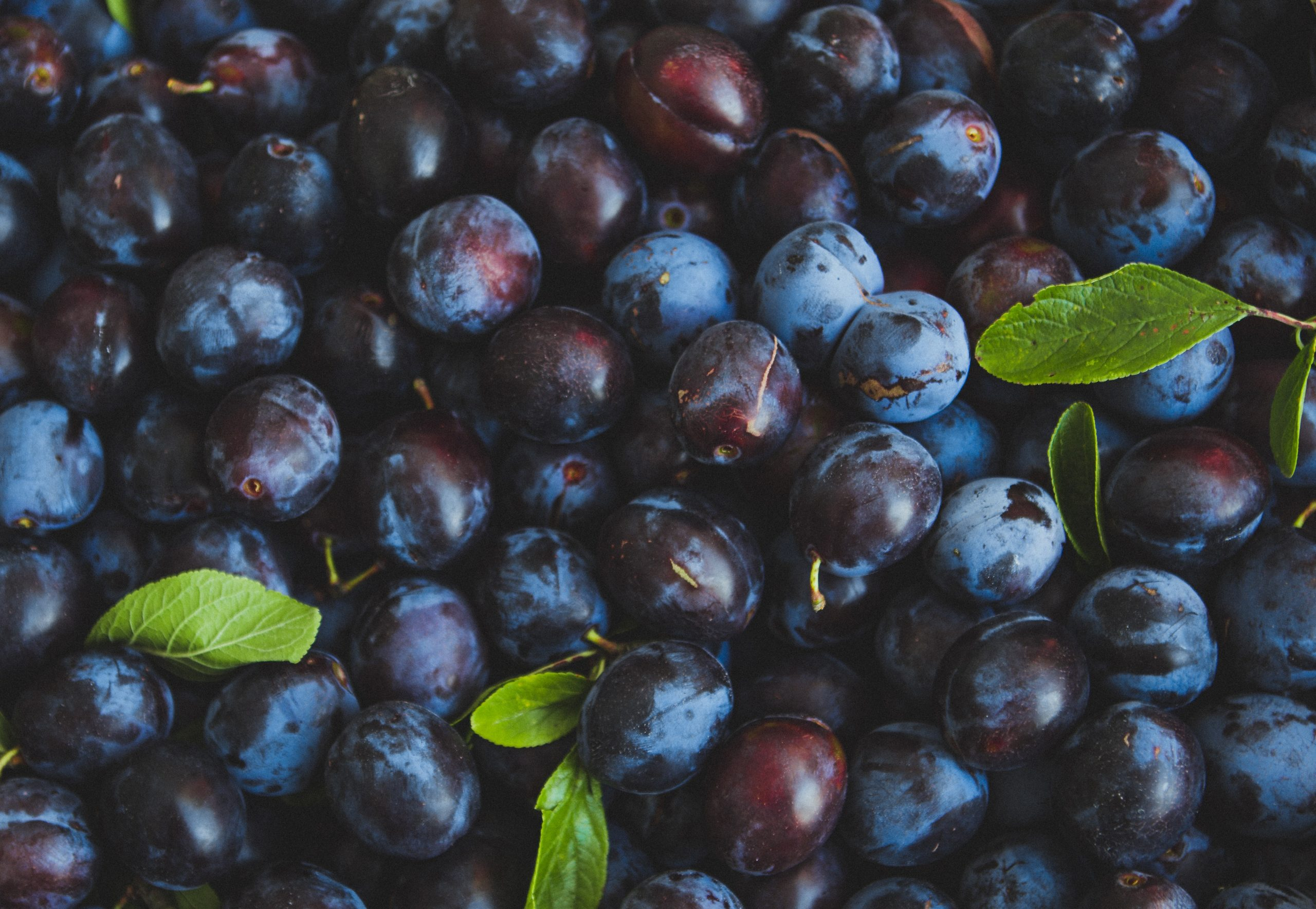 Plum Trivia   30 facts about the tasty fruit