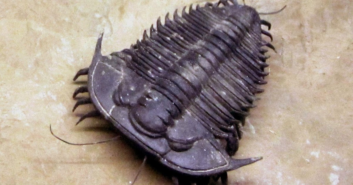 Do Trilobites Bite?