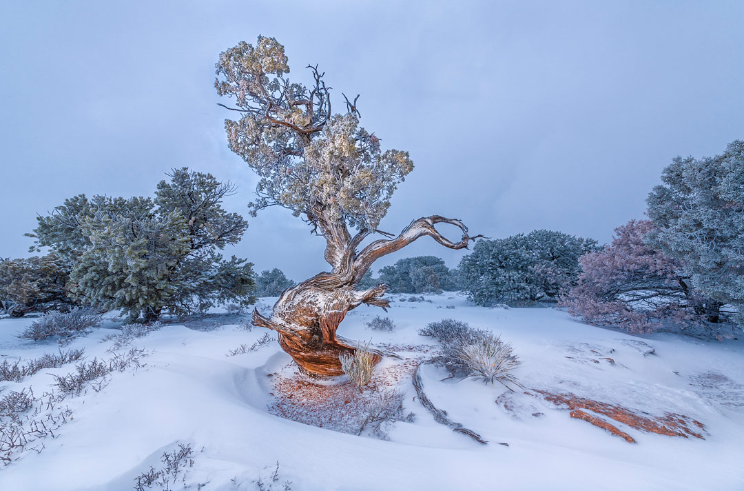 Island in the Sky District, Canyonlands NP, Utah, USA by Bruce Hucko