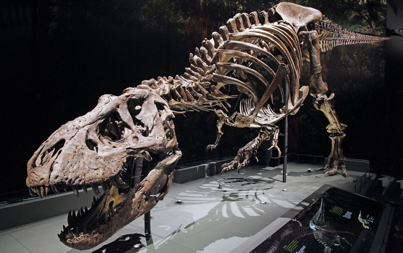 Who Laps Whom on the Walking Track--Tyrannosaurus rex or You? Science Has a New Answer