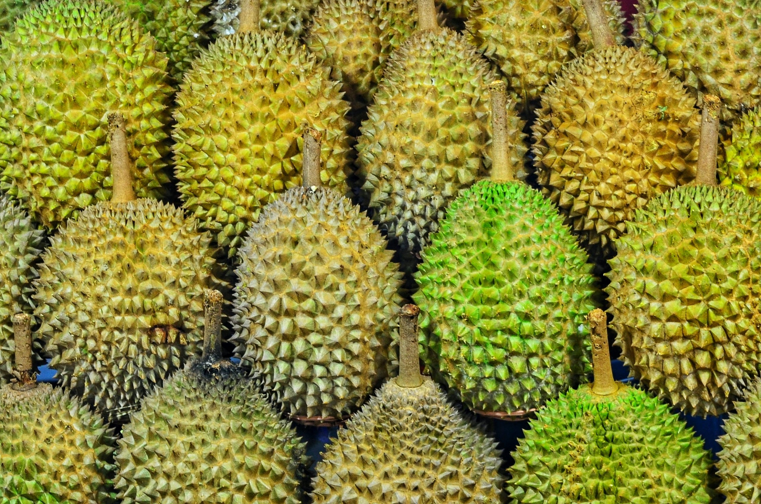 """Durian Trivia 
