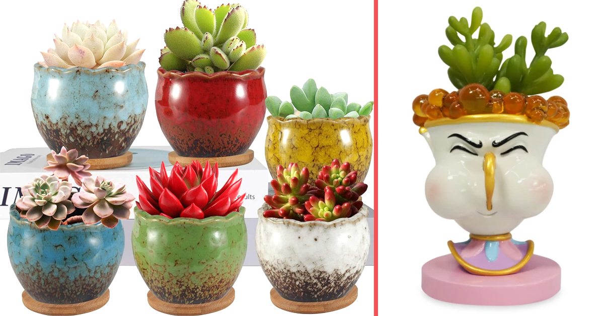"""Disney Fans Can Grab a Fake Succulent Replica of Chip From """"Beauty and the Beast"""""""
