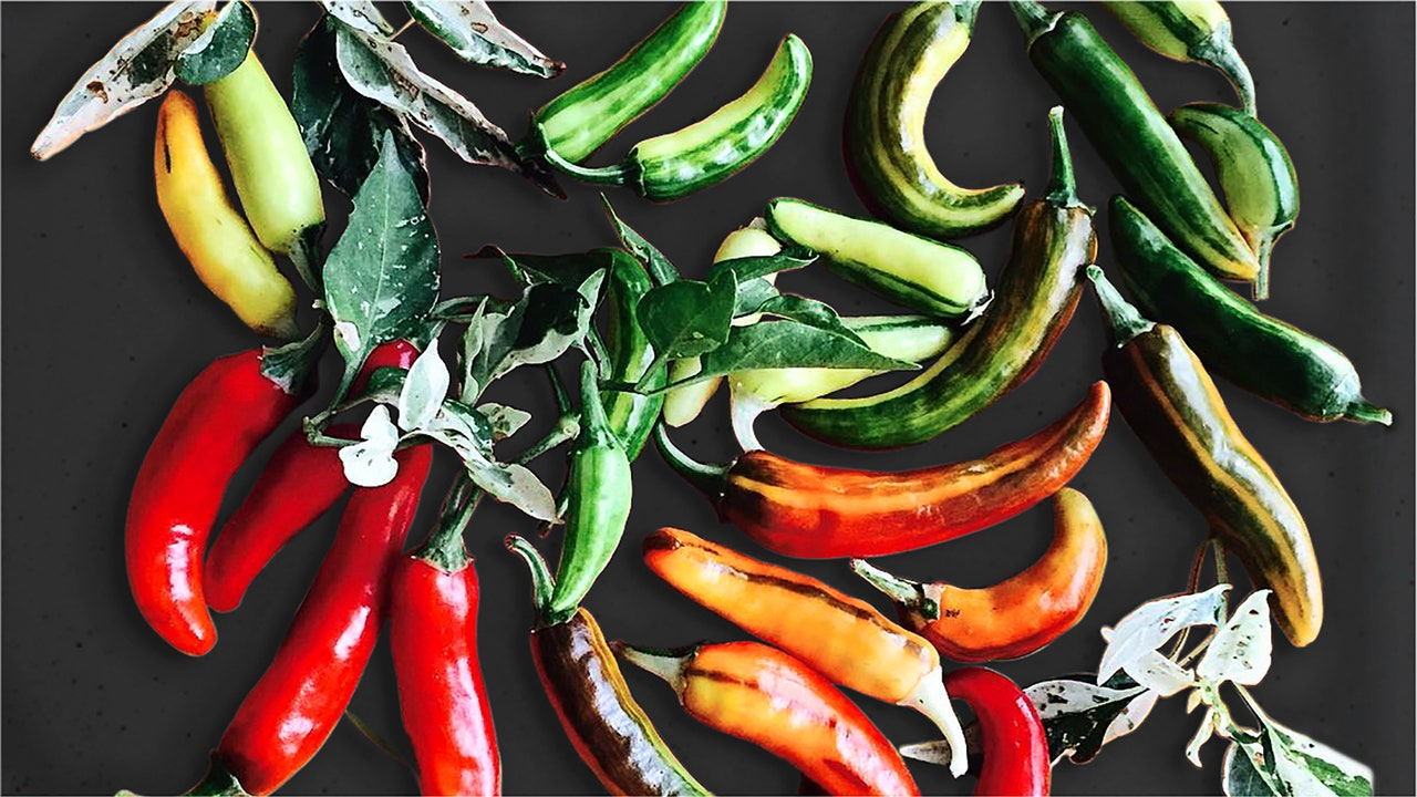 The Story of Fish Peppers, a Legacy of the African American Garden