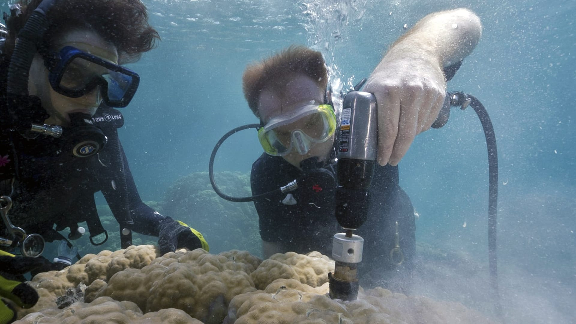 Ocean acidification causing coral 'osteoporosis' on iconic reefs