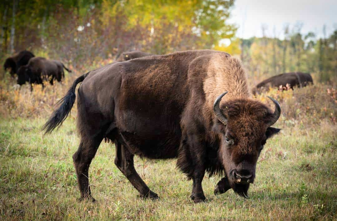 14 Fun Things to Do in Riding Mountain National Park, MB