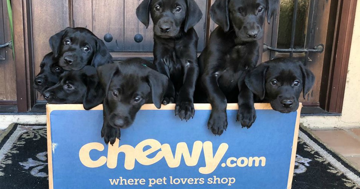 $50 Chewy eGift Card Only $45 Delivered