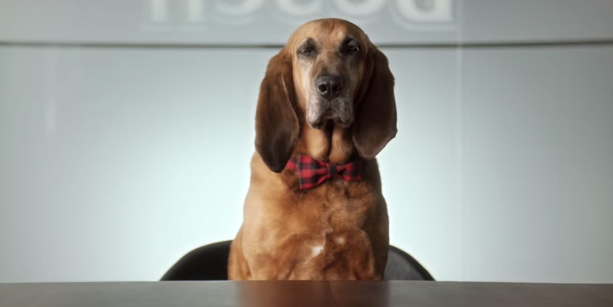Busch Wants To Hire A Dog As A 'Chief Tasting Officer'