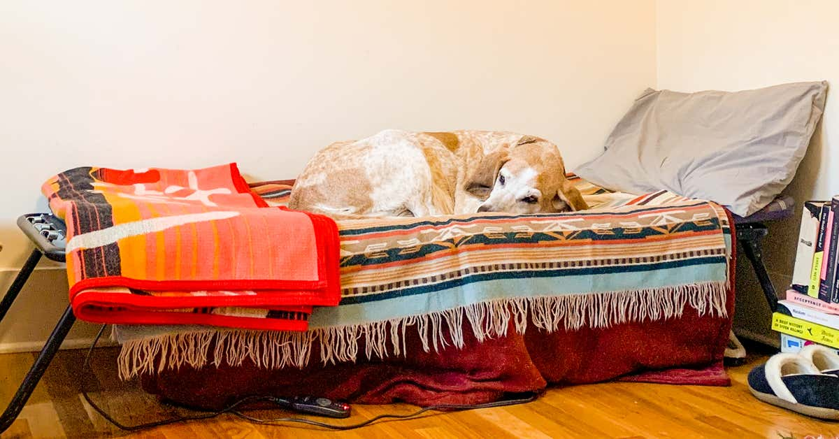 Guest Bed, Dog Haven, Therapy Couch: An Ode to My Coleman Camping Cot