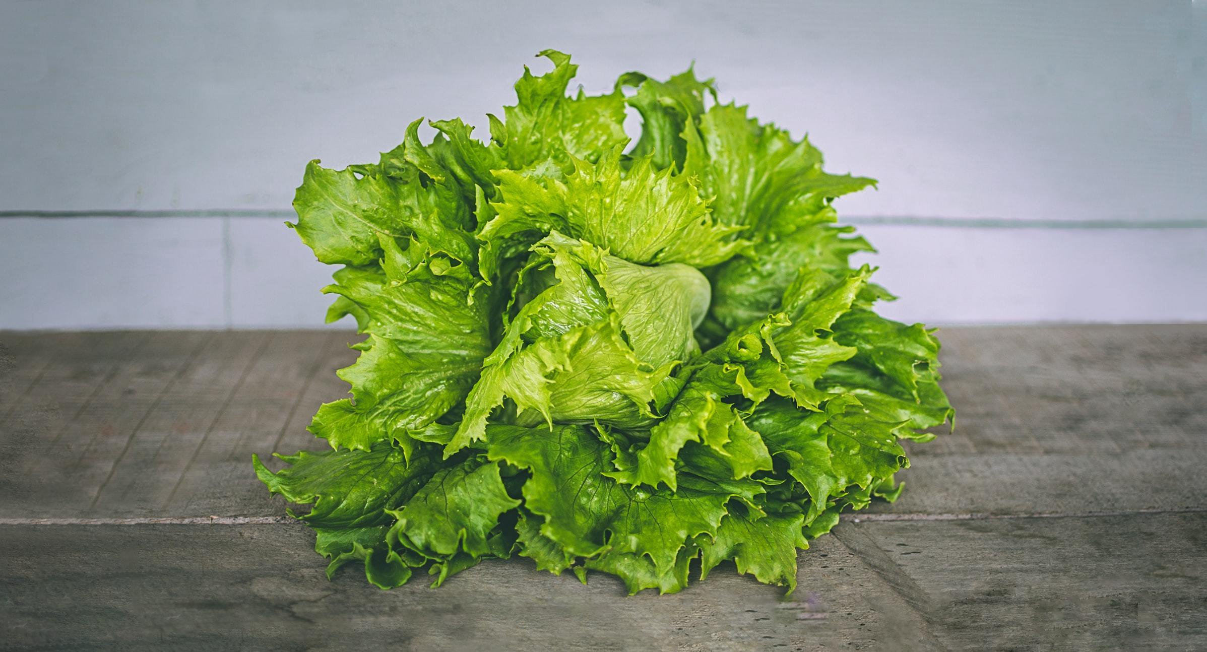 Lettuce Trivia | 30 facts about the vegetable