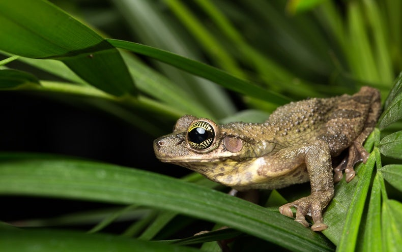 Science Sound(E)scapes: Amazon Frog Choruses at Night