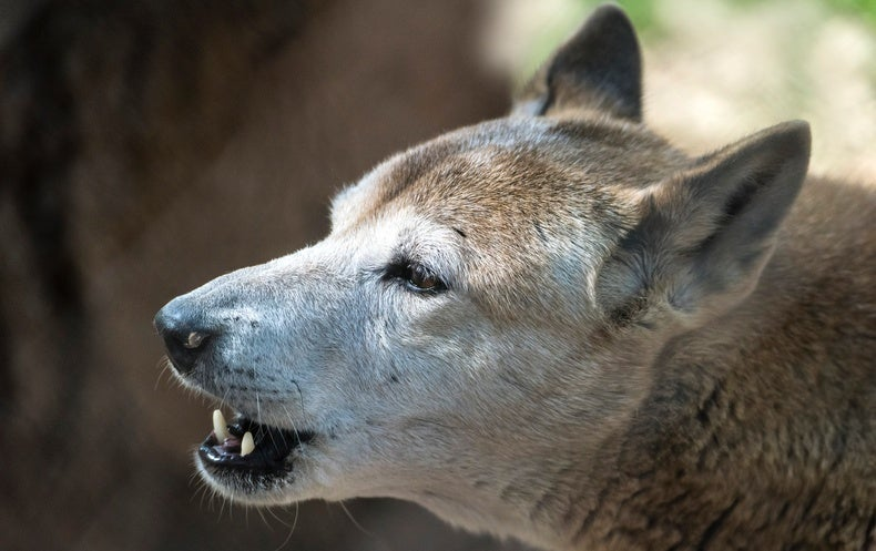 Ancient Dogs Had Complex Genetic Histories