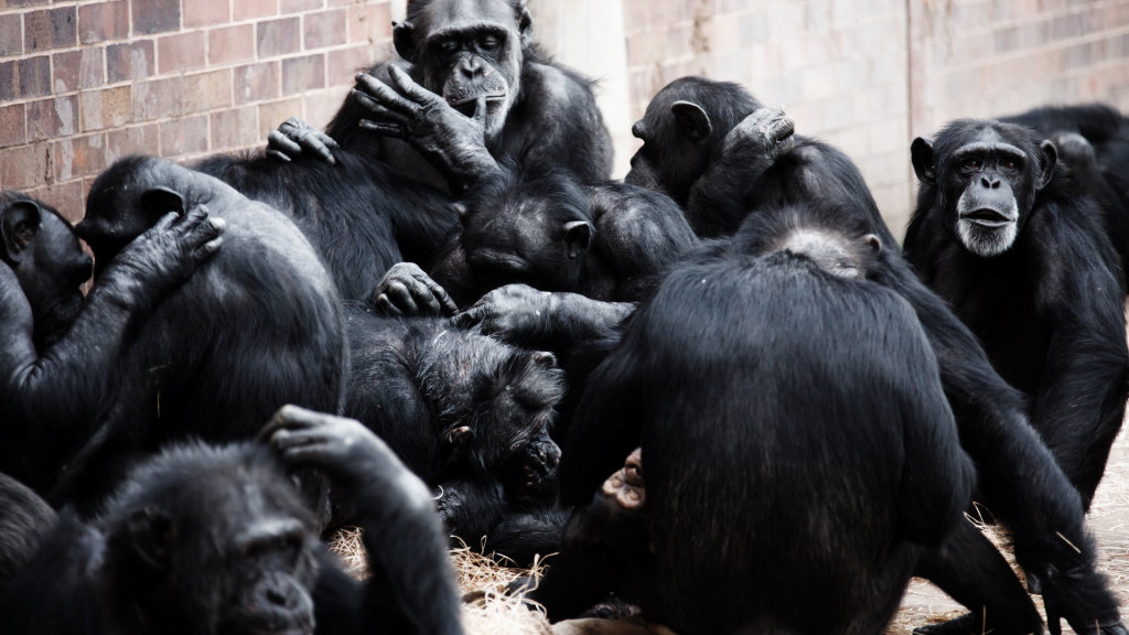 A Shrewdness of Apes? Collective Nouns Are a 500-Year-Old Language Fad