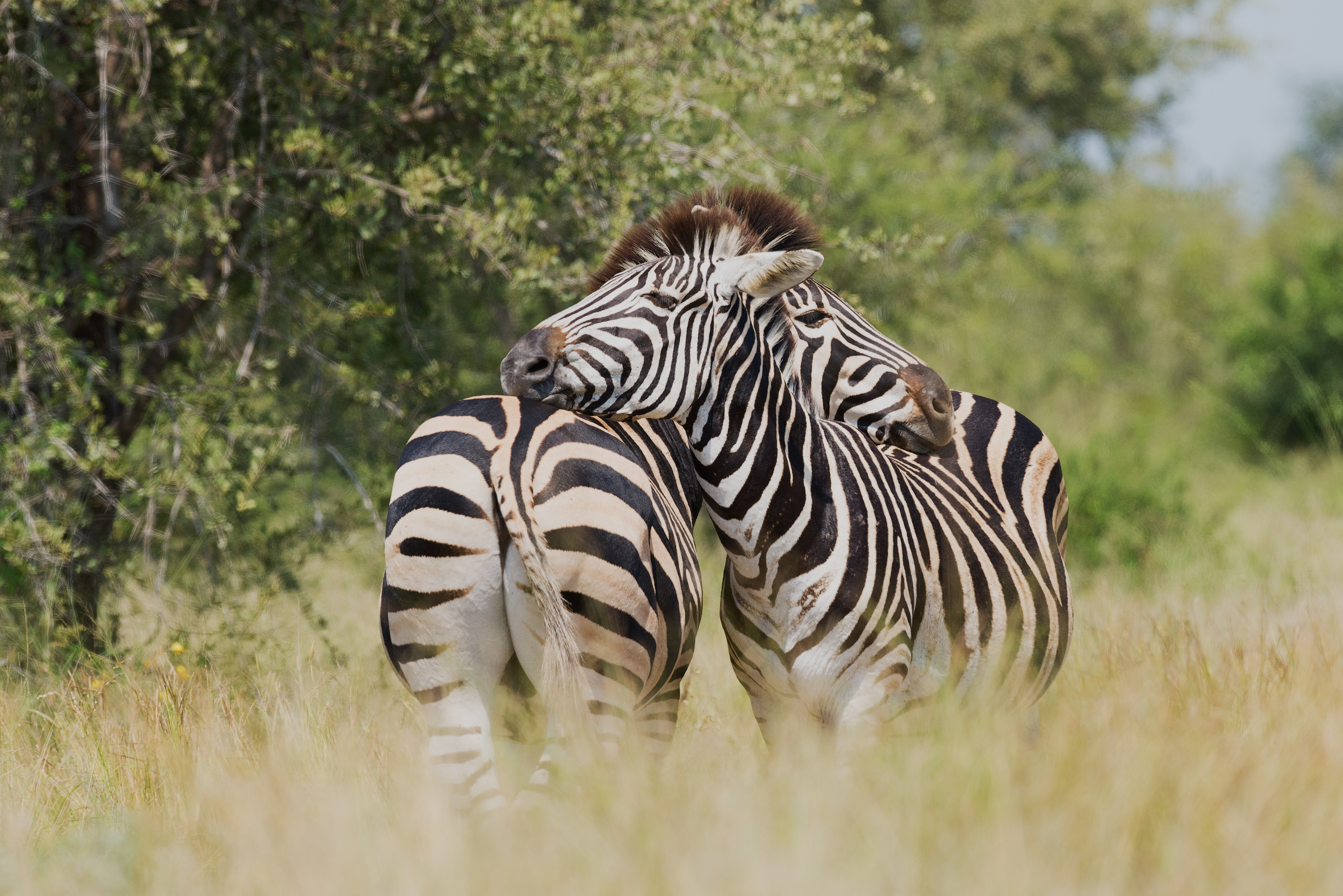 Quiz Can You Guess Whether These Animals Have Spots or Stripes?