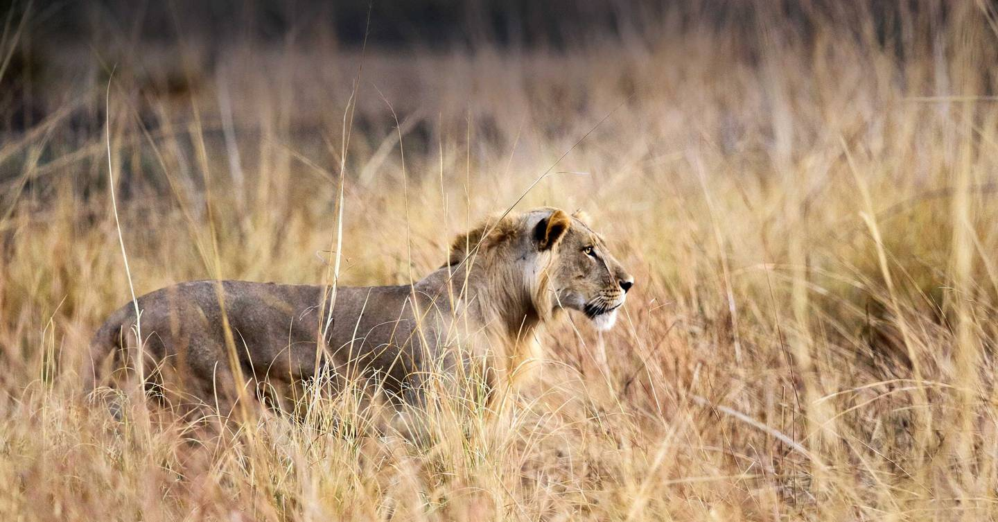 Why safari lovers should head to West Africa