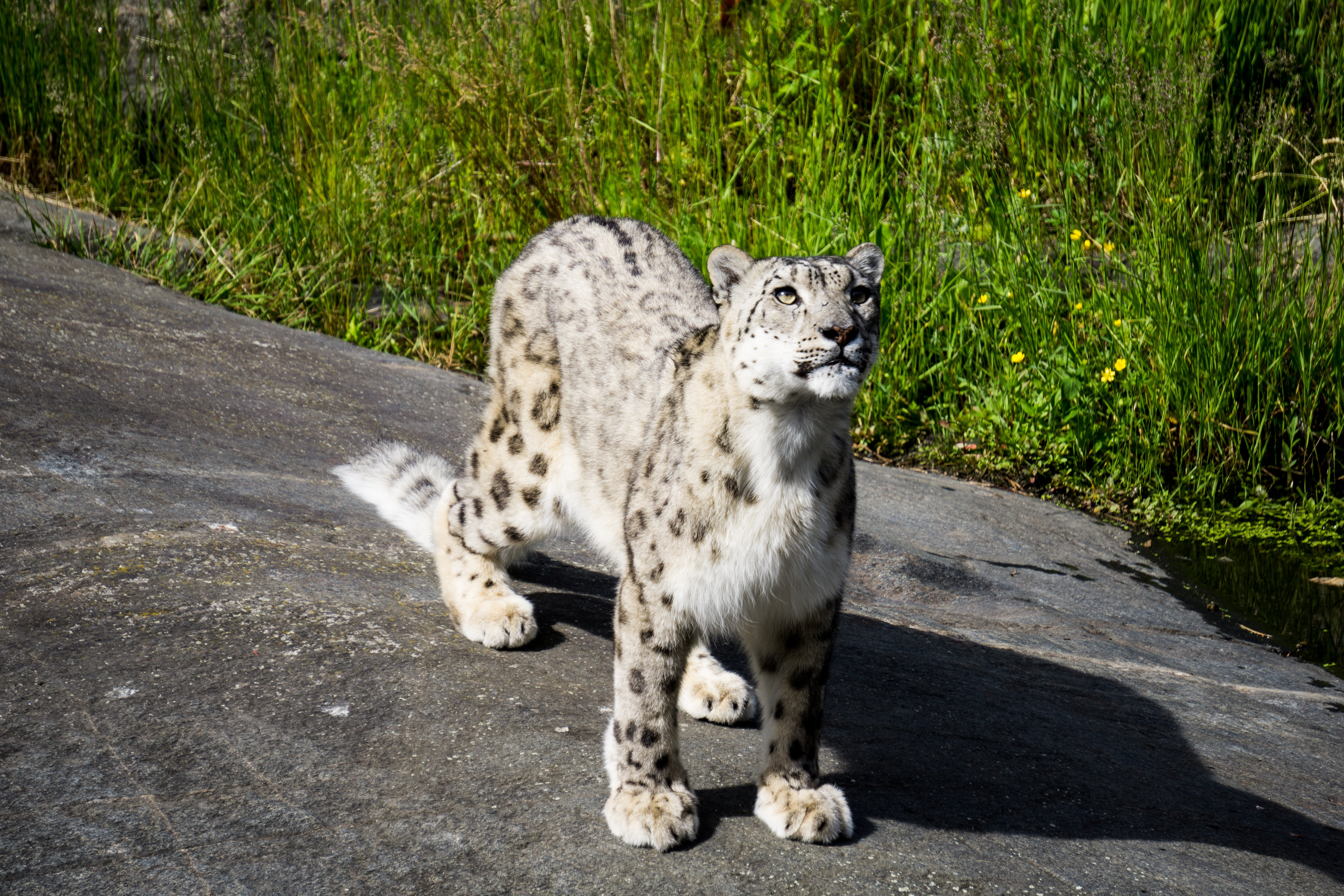 What it's like to trek with snow leopards in Ladakh