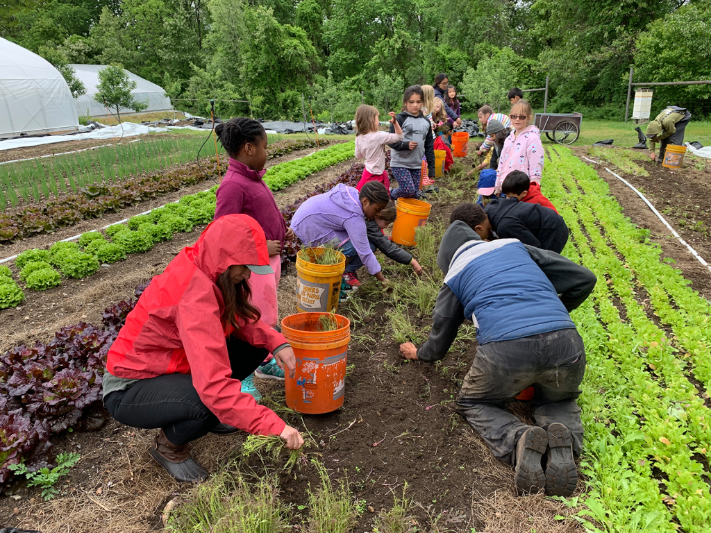 Greater Lowell Community Foundation promotes healthy eating during pandemic