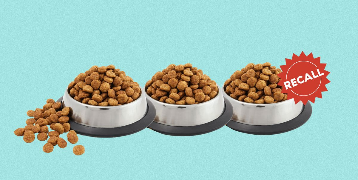 Dog Food Brands Recalled Over Potential Mold Contamination