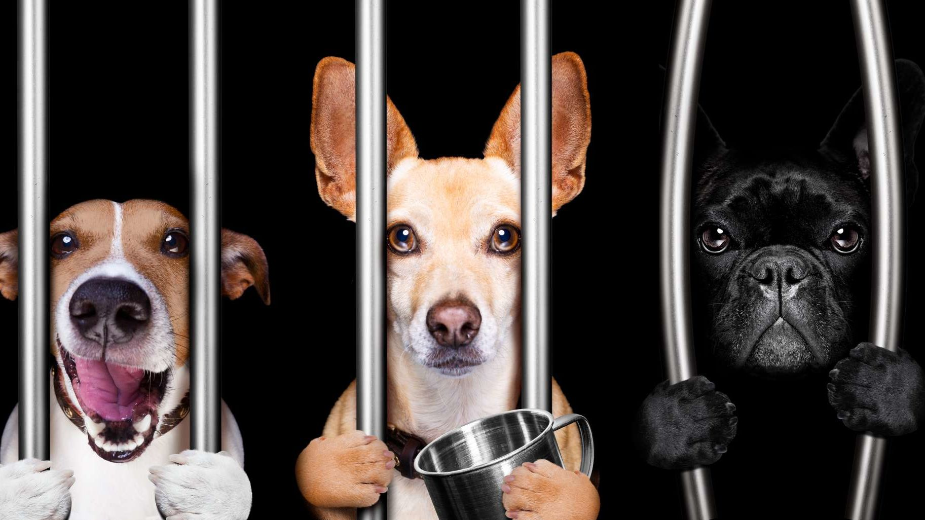 25 Animals That Have Been Imprisoned or Arrested