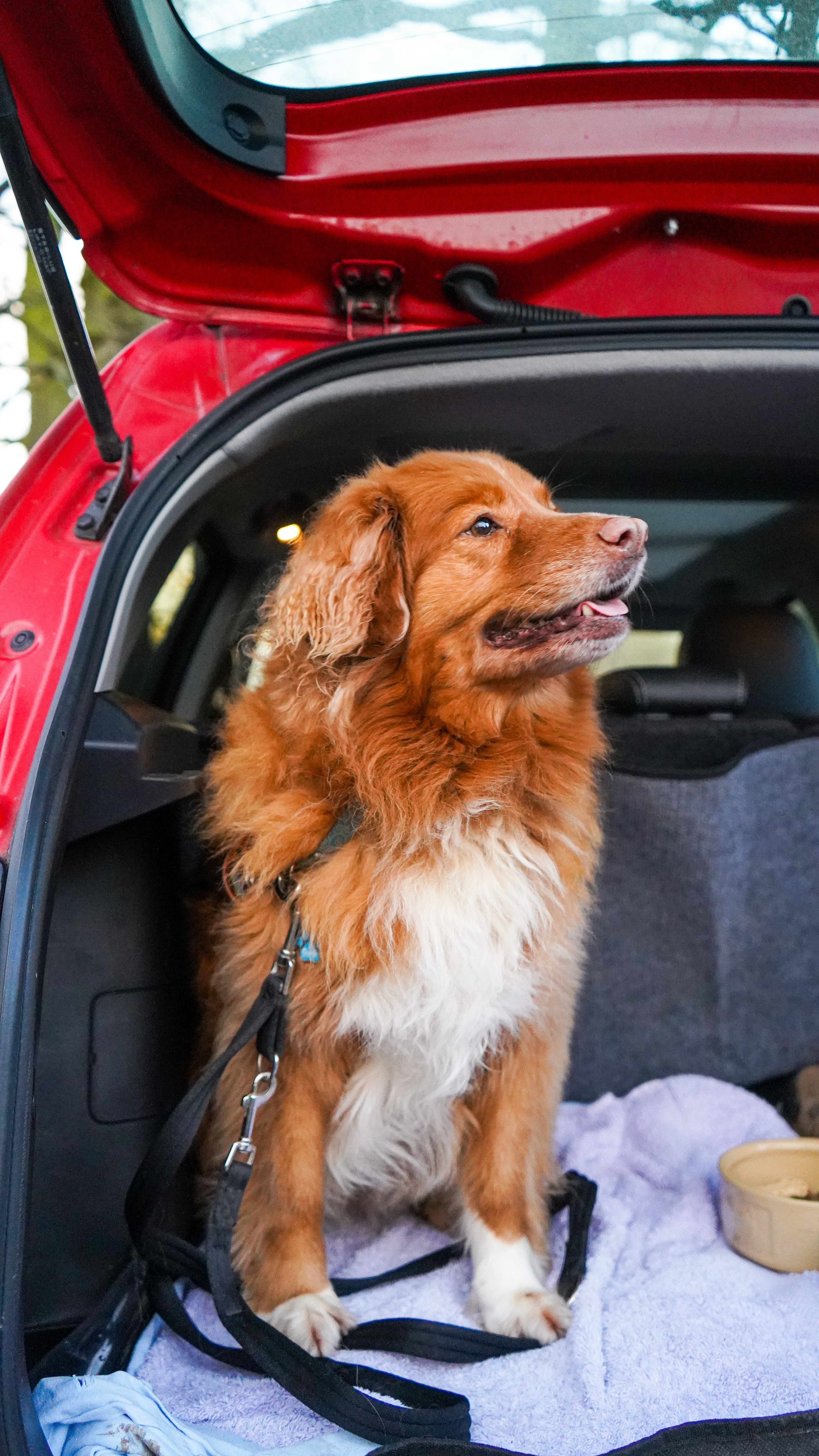 Hyderabad Just Got a Cab Service for Pets and Stray Animals