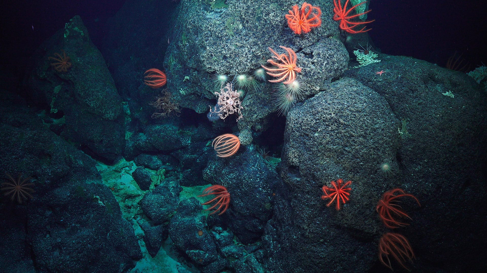 Why we explore deep-water canyons off our coast