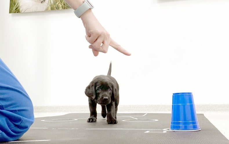 Puppies Understand You Even at a Young Age, Most Adorable Study of the Year Confirms