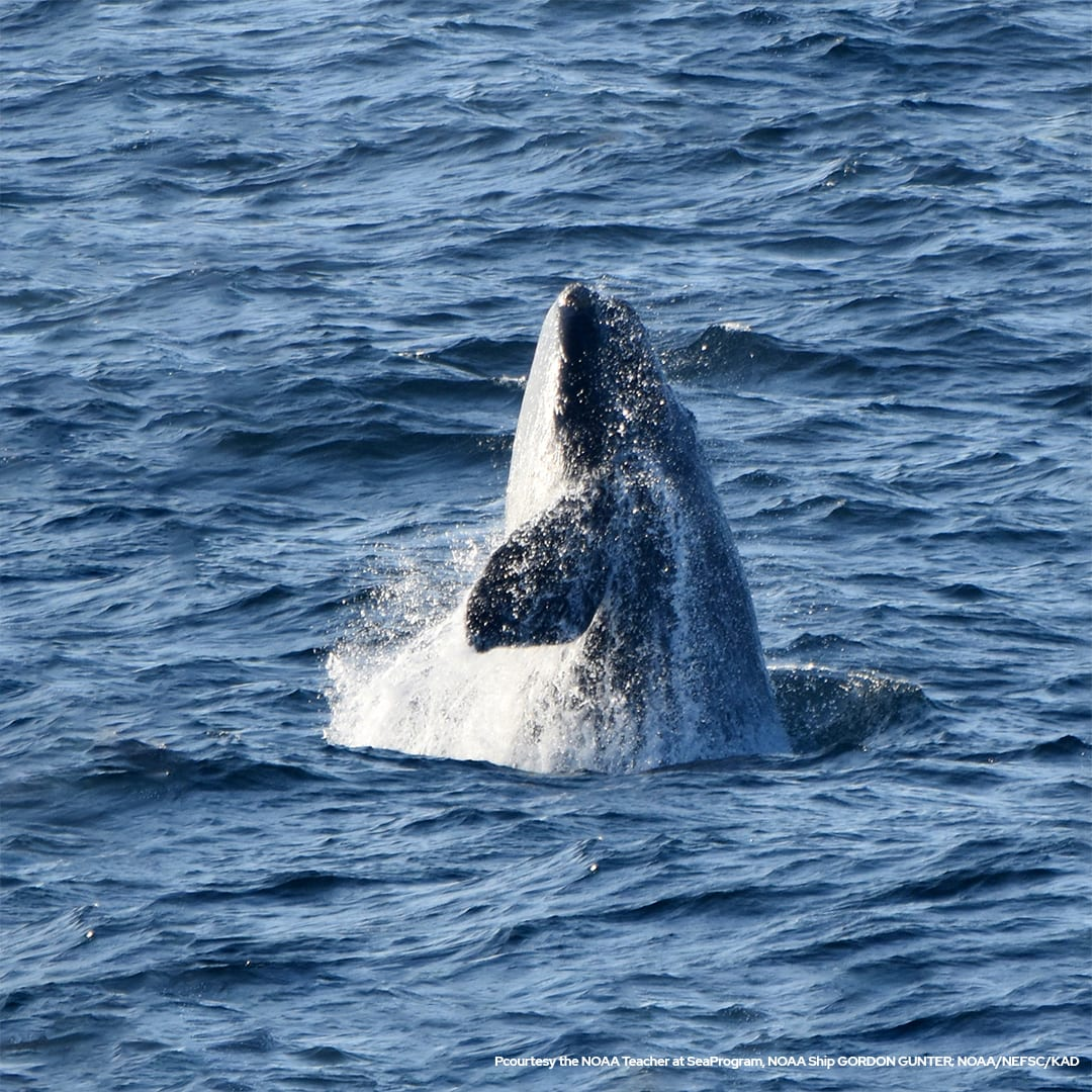 Smart cameras keep lookout for endangered whales