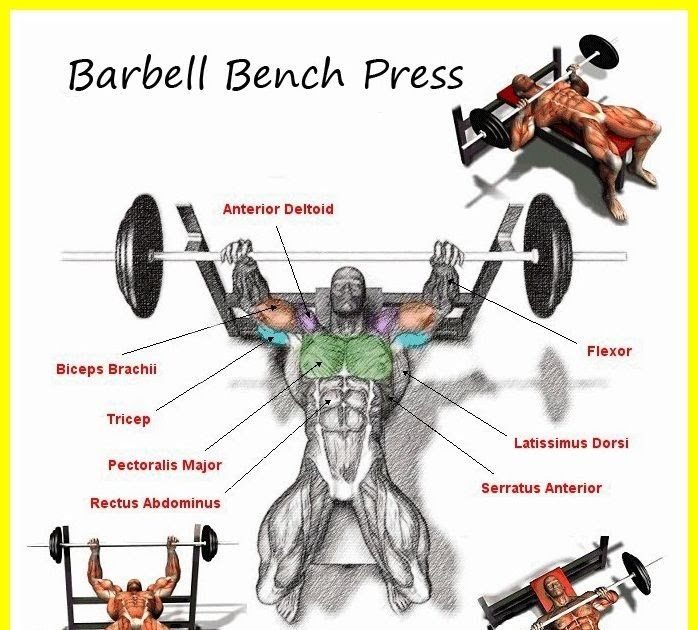 What Is Bench Presses